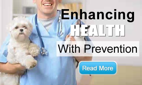 Preventative Services