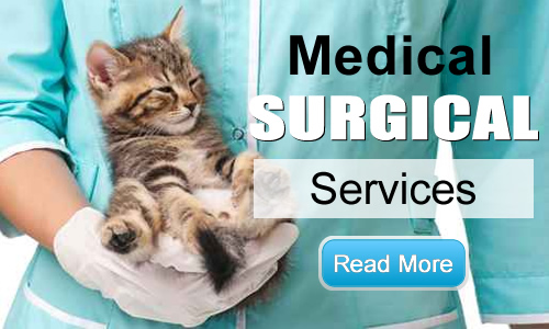 Veterinary Surgical Services